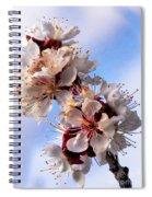 Peach Blossoms Spiral Notebook
