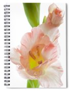 Peach Flushed Gladiolus Spiral Notebook