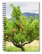 Peaches On Tree Spiral Notebook