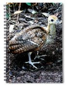 Peacock Baby Spiral Notebook