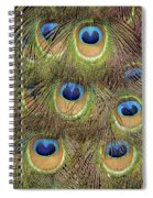Peacock Feather Eyes Spiral Notebook