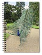 Peacock Glory Spiral Notebook