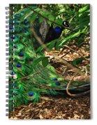 Peacock Hiding Spiral Notebook