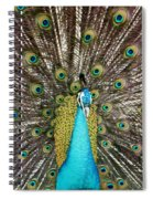 Peacock Plumage Feathers Spiral Notebook
