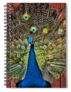 Peacock Tails Spiral Notebook