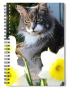 Peanut The Cat And Jonquils Spiral Notebook