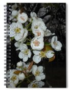 Pear Blooms And Tree Spiral Notebook