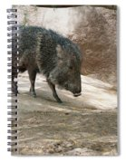 Peccary Spiral Notebook