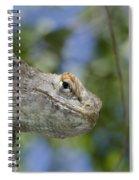 Peek-a-boo Lizard Spiral Notebook