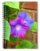 Peek-a-boo Morning Glories Spiral Notebook