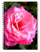 Peek-a-boo Rose Square Spiral Notebook