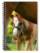 Peek'a Boo Spiral Notebook