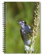 Peekaboo Birdie  Spiral Notebook