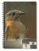 Peeping Bluebird Spiral Notebook