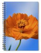 Pefect In Orange Spiral Notebook