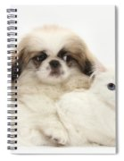 Pekinese Puppy And Maine Coon-cross Spiral Notebook