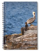 Pelican And Cormorants Spiral Notebook
