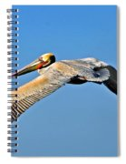 Pelican In Flight Spiral Notebook