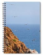 Pelicans Off The Point Spiral Notebook
