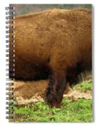 Pennsylvania Bison Spiral Notebook