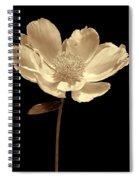 Peony Flower Portrait Sepia Spiral Notebook