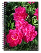 Peony Named Karl Rosenfield Spiral Notebook