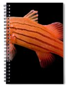 Peppermint Basslet Spiral Notebook