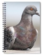 Perched On The The Dock Of The Bay Spiral Notebook