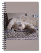 Percy Cat Sleep Stylist Spiral Notebook