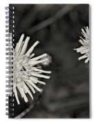 Perennial Sow-thistle Monochrome Spiral Notebook