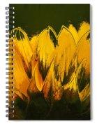 Petales De Soleil - A41b Spiral Notebook