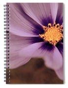 Petaline - P04d Spiral Notebook