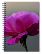 Petals And More Spiral Notebook