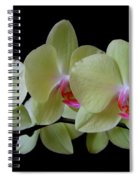 Phalaenopsis Fuller's Sunset Orchid No 1 Spiral Notebook