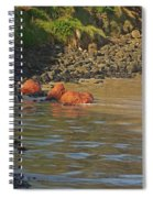 Phillip Island 2 Spiral Notebook