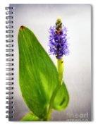 Pickerel Blue Pontederia Cordata Spiral Notebook