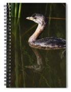Pied-billed Grebe In The Reeds Spiral Notebook