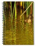 Pied-billed Grebe Near The Reeds Spiral Notebook
