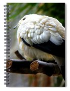 Pied Imperial Pigeon Spiral Notebook