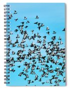 Pigeon Flight Spiral Notebook