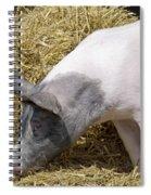 Piggy Piggy In The Straw Spiral Notebook