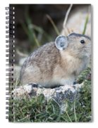 Pika Spiral Notebook