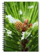 Pine Cone Cloeup Spiral Notebook