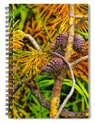 Pine Cones And Needles On A Branch Spiral Notebook