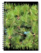 Pine Cones And Needles Spiral Notebook