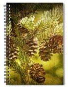 Pine Cones No.056 Spiral Notebook