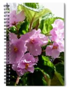 Pink African Violets Spiral Notebook