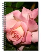 Pink And White Rose Spiral Notebook