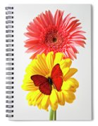 Pink And Yellow Mums Spiral Notebook