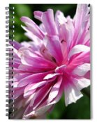 Pink Anemone From The St Brigid Mix Spiral Notebook